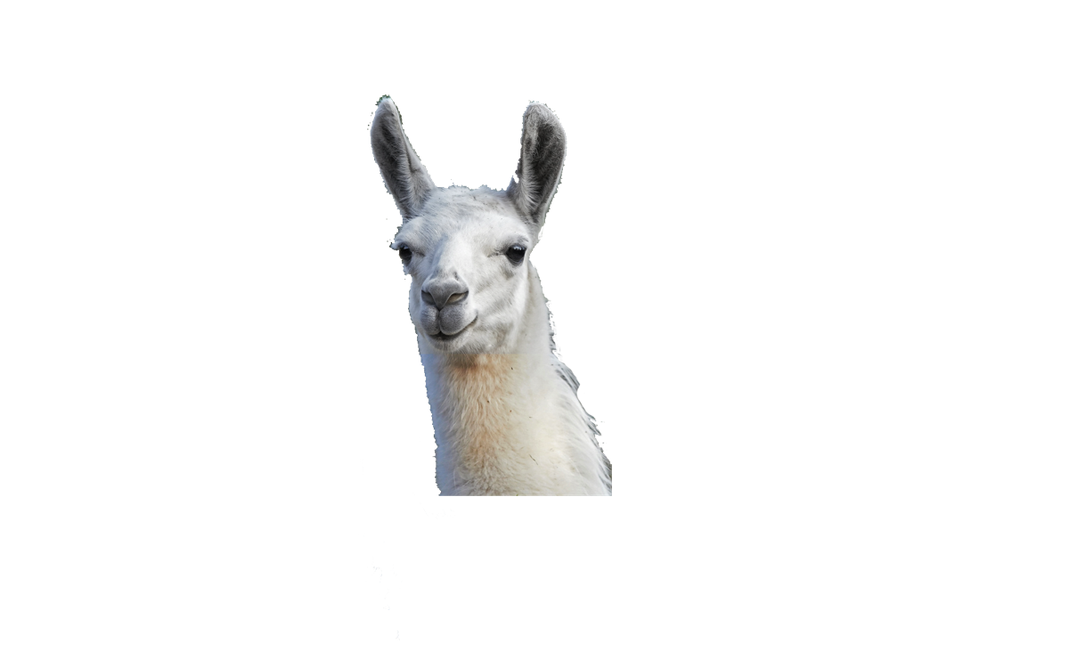 Llama background png. Gifts for the lover