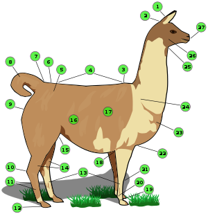Llama clipart colorful. Wikipedia names of body