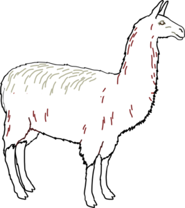 Llama clipart llama outline. Clean clip art at