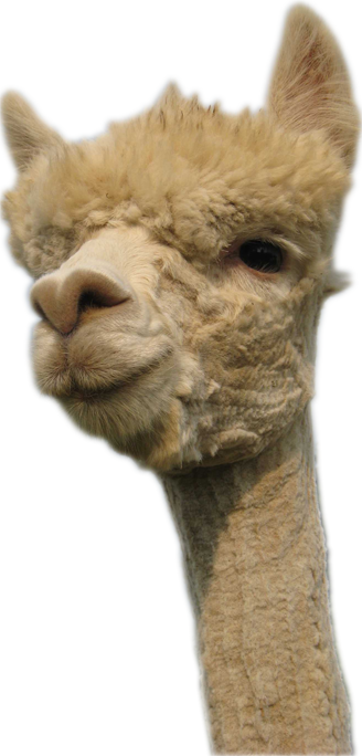 Llama head png. Backup and support