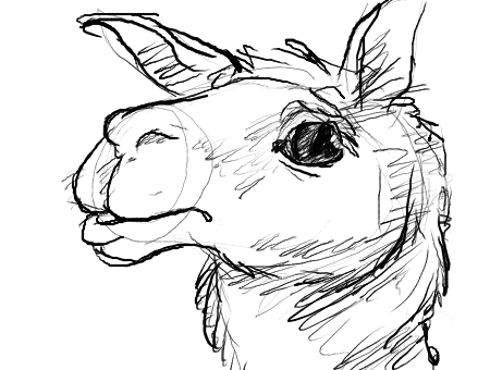 Llama face png black. Gallery for drawings of