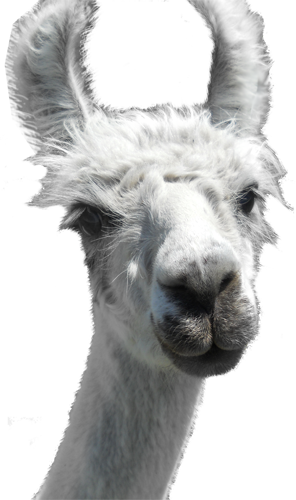 Llama head png. Contest download psd file