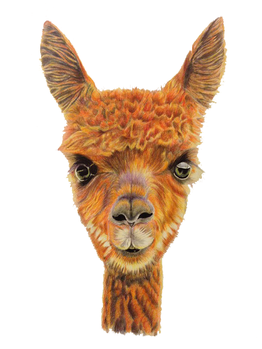 Llama head png. Alpaca sheep illustration hand