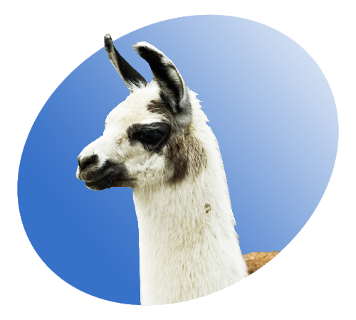 Llama icon png. File p wikimedia commons