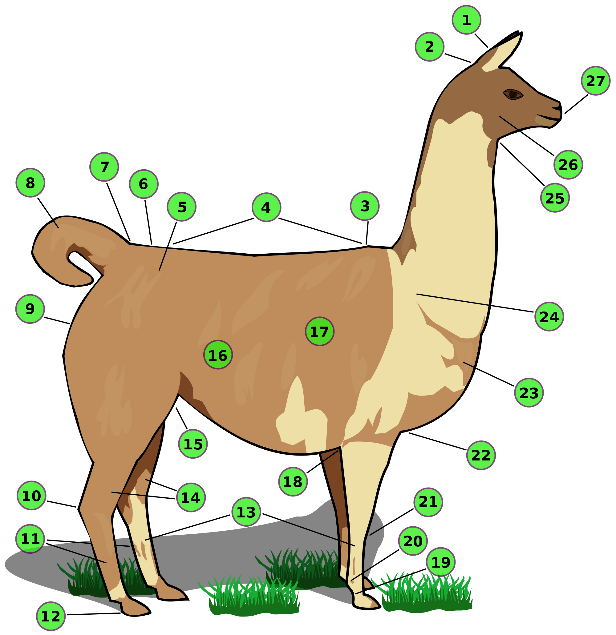 Llama l png. File with numbers svg