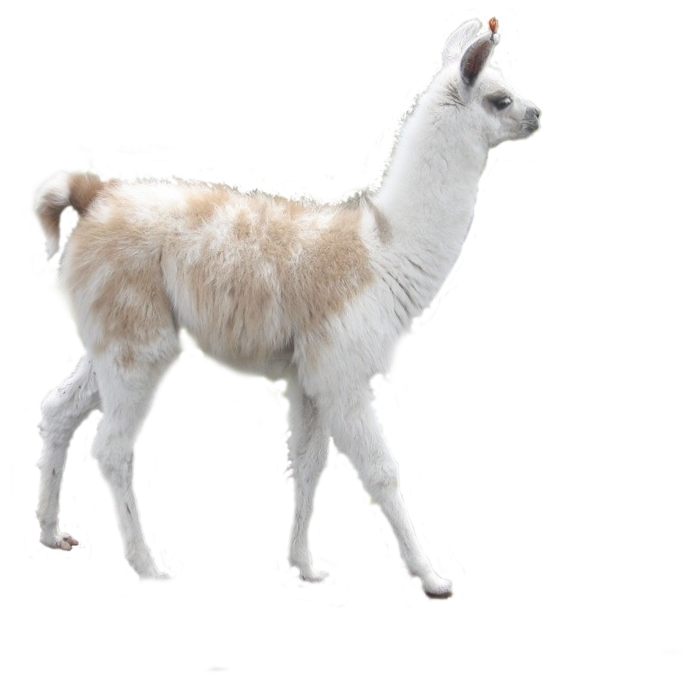 Llama png transparent background. Download banner royalty free