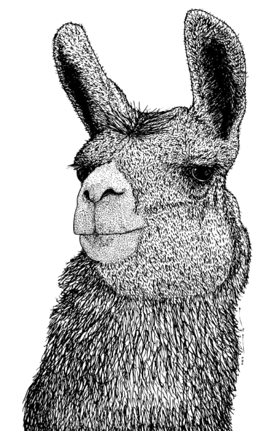 Llama png white. Millions of images and