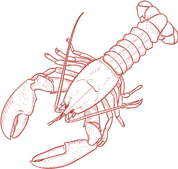 Seafood drawing lobster. Free online animal red