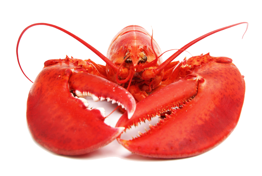 Lobster png. Free download peoplepng com