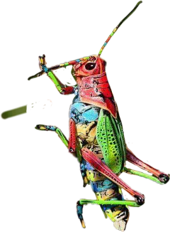 Locust drawing belalang. The newest stickers on