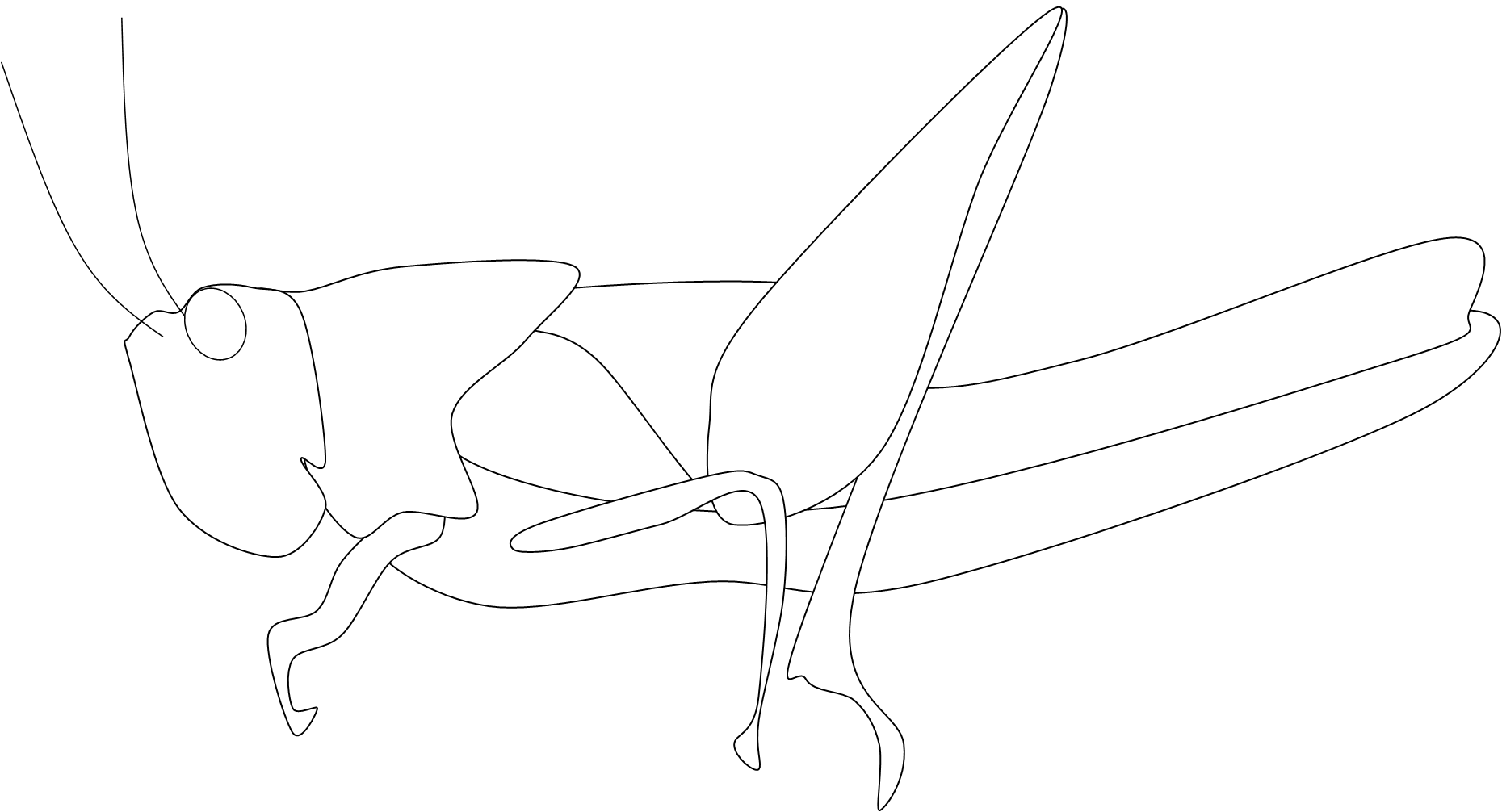 Locust drawing belalang. Lucost bw free images