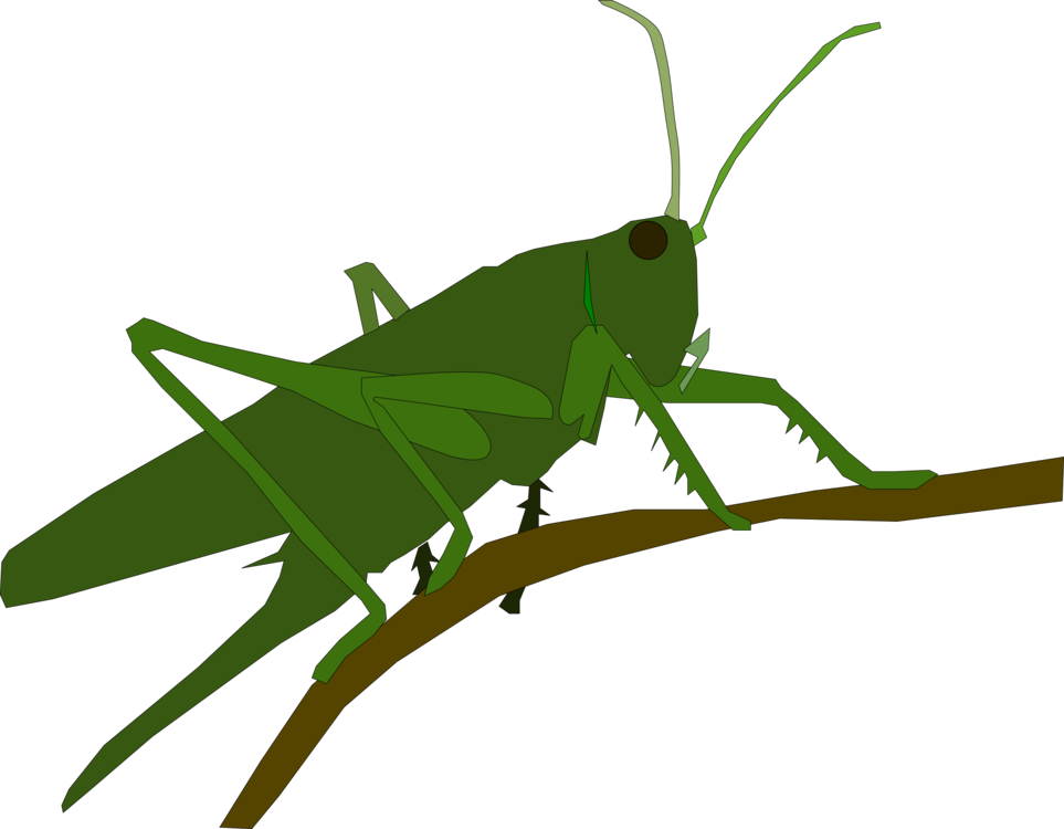 Grasshopper insect caelifera animal. Locust drawing leaf graphic