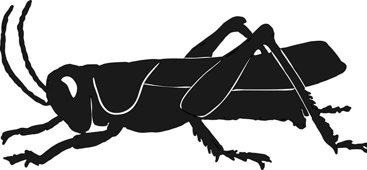 Locust drawing plague. Grasshopper clip art