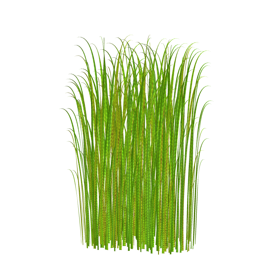Pond transparent grass. Png clipart image free