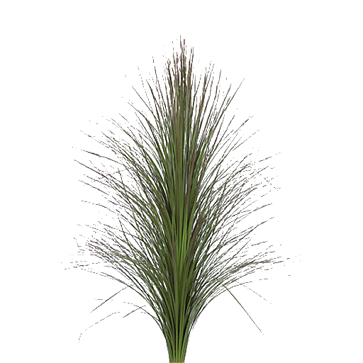 Grass png texture. Long picture arts