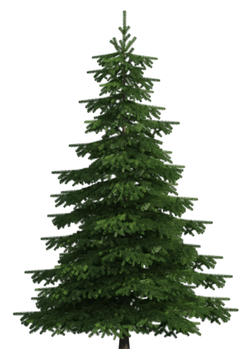 Long needle pine tree png. Realistic clip art pinterest