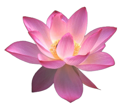 Lotus blossom png. Flower images free download