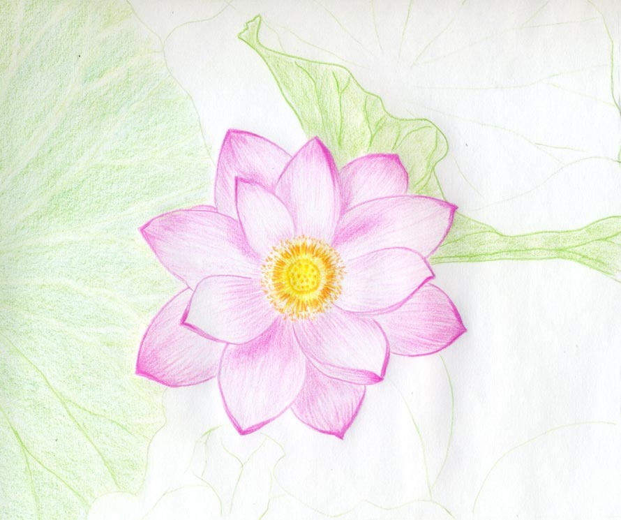 Lotus clipart easy draw. Flower drawing color at