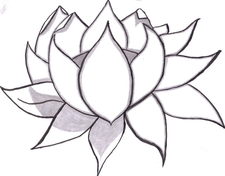 Lotus clipart easy draw. Learn to flowers of