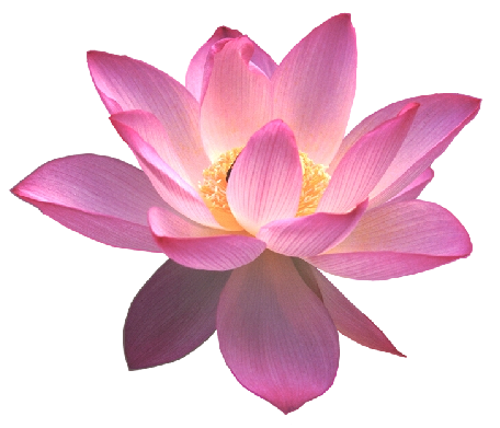 Strength Drawing Lotus Flower Bomb Transparent Png Clipart Free