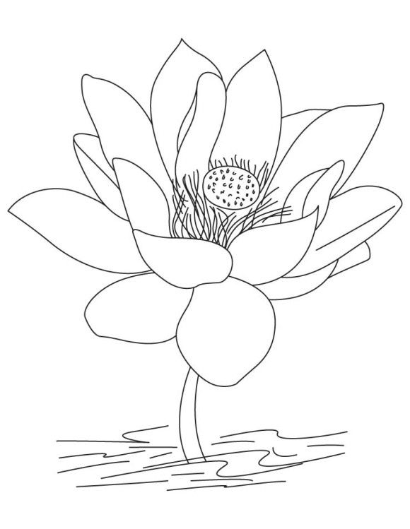 Lotus National India Flower Transparent Png Clipart Free Download
