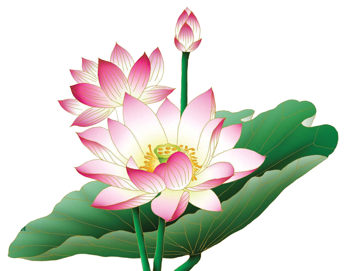 Lotus flower png. Hd transparent images pluspng