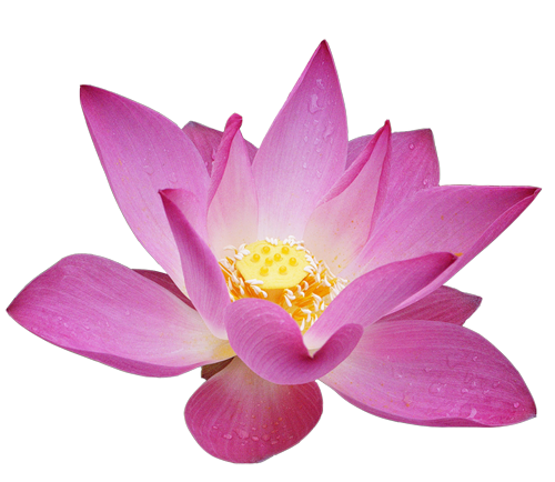 Lotus flower png. Clipart gallery yopriceville high