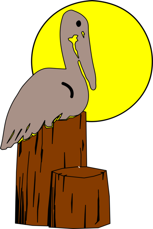 Bird nest brown pelican. Louisiana drawing animal png free library