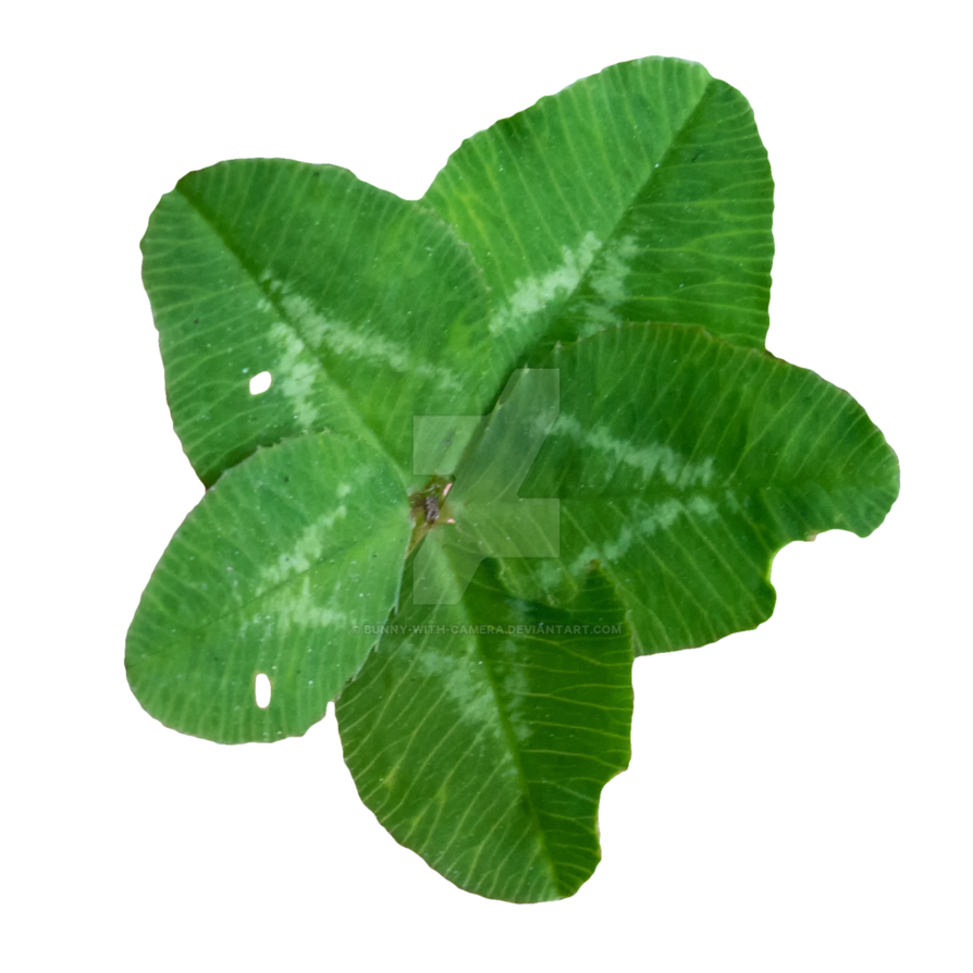 Lucky clover png. Ultra by bunny with