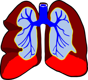 lungs clipart healty