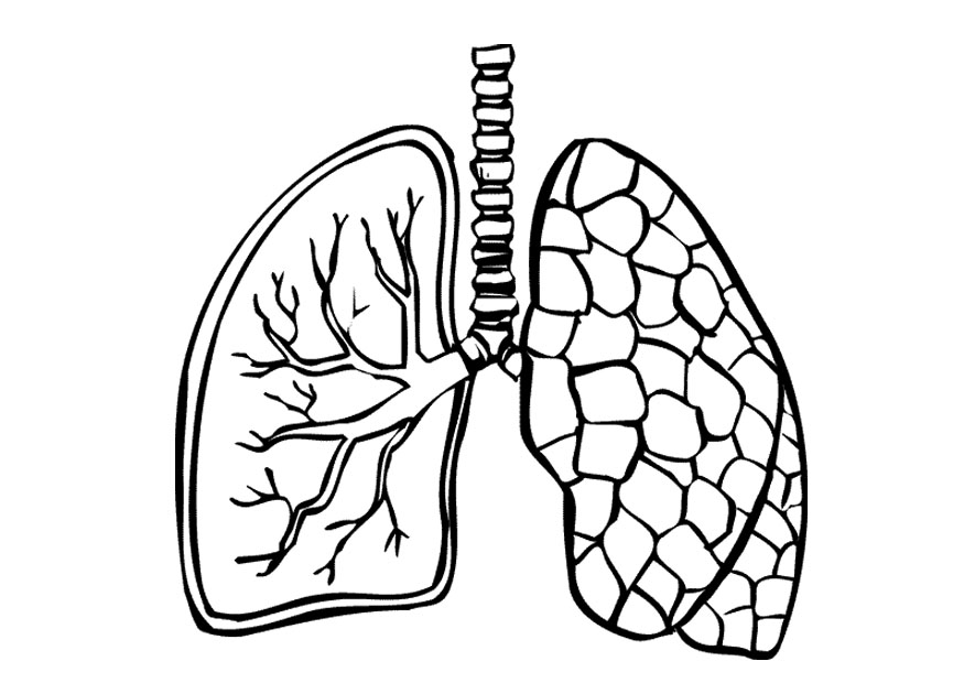 Lungs clipart black and white. Panda free images lungsclipartblackandwhite