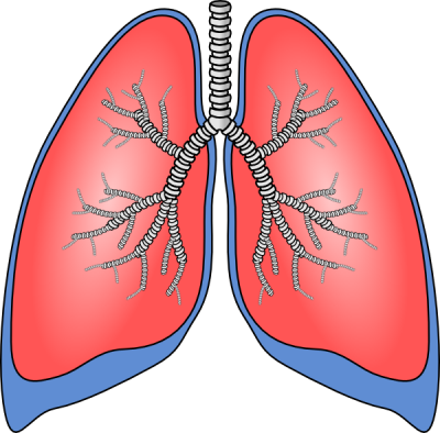 drawing transparent lung