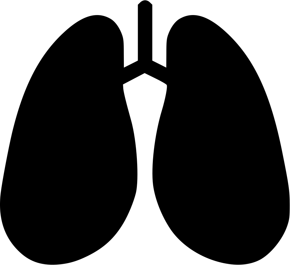 lungs clipart svg