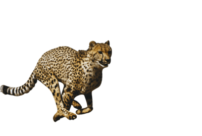 Lynx vector caracal. Png dlpng cheetah file
