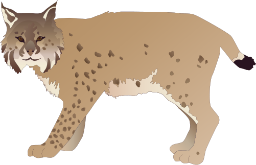 Lynx vector caracal. Png