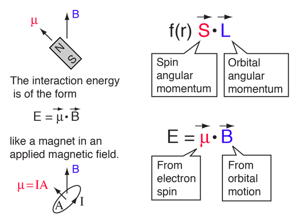 Magnetic vector interaction. Hydrogen fine structure this