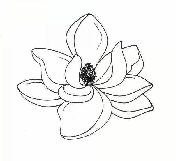 Magnolia clipart. Best art reference