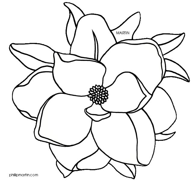 Magnolia Magnolia Flower Transparent Png Clipart Free Download