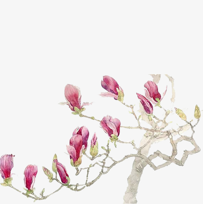 Magnolia clipart magnolia tree. A of hand painted