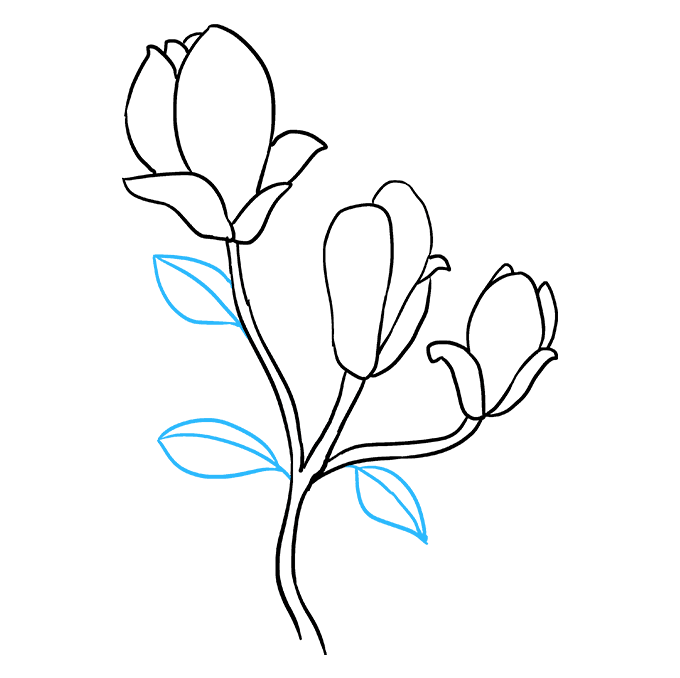 Drawing Shade Flower Transparent Png Clipart Free Download Ya