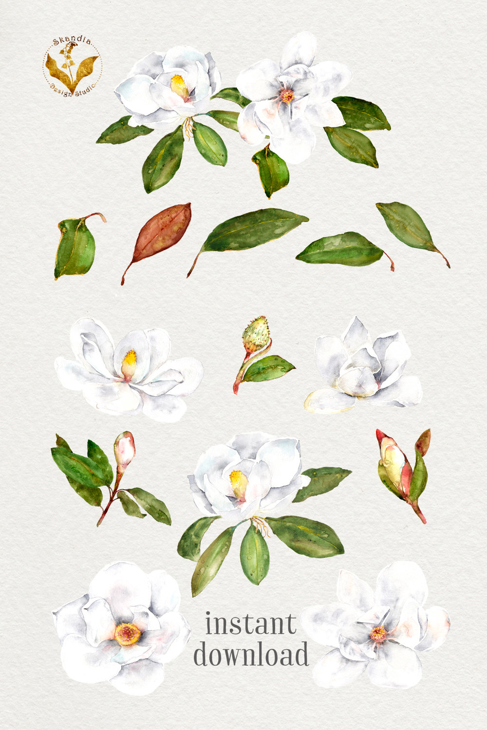 Magnolia clipart watercolor. Flowers this is a