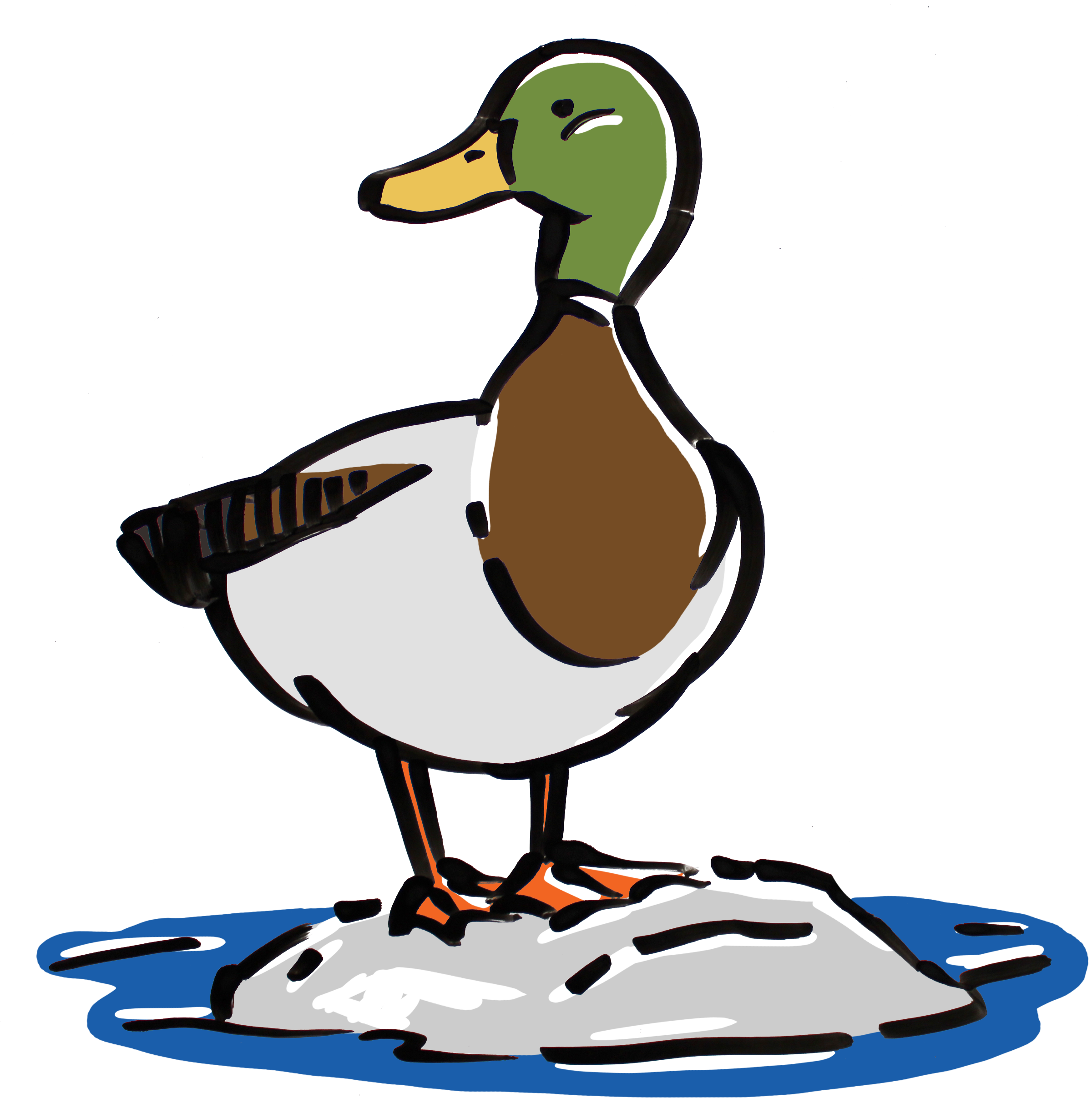 Mallard drawing animated. A day in the
