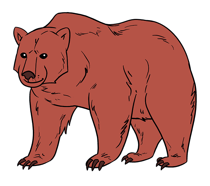 How to draw a. Grizzly drawing fierce vector royalty free download