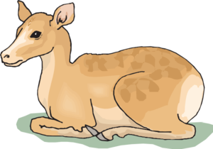 Mammal drawing fawn. Sitting deer clip art