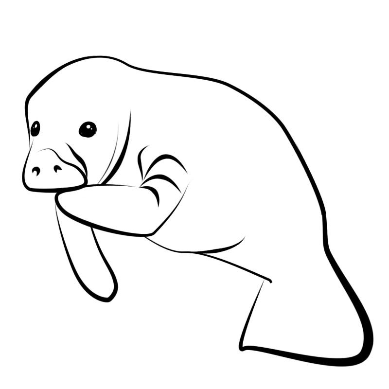 Jpg for pattern pinterest. Manatee clipart clip art royalty free library