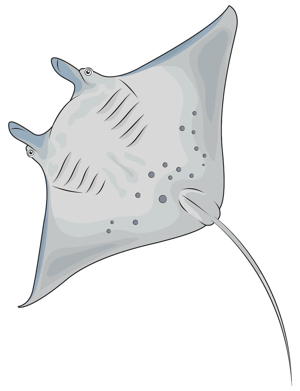Manta. Ray clipart free download