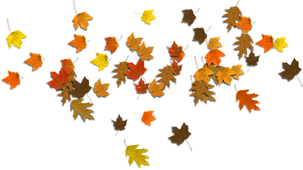 Maple clipart acorn leaf. Oak leaves at getdrawings