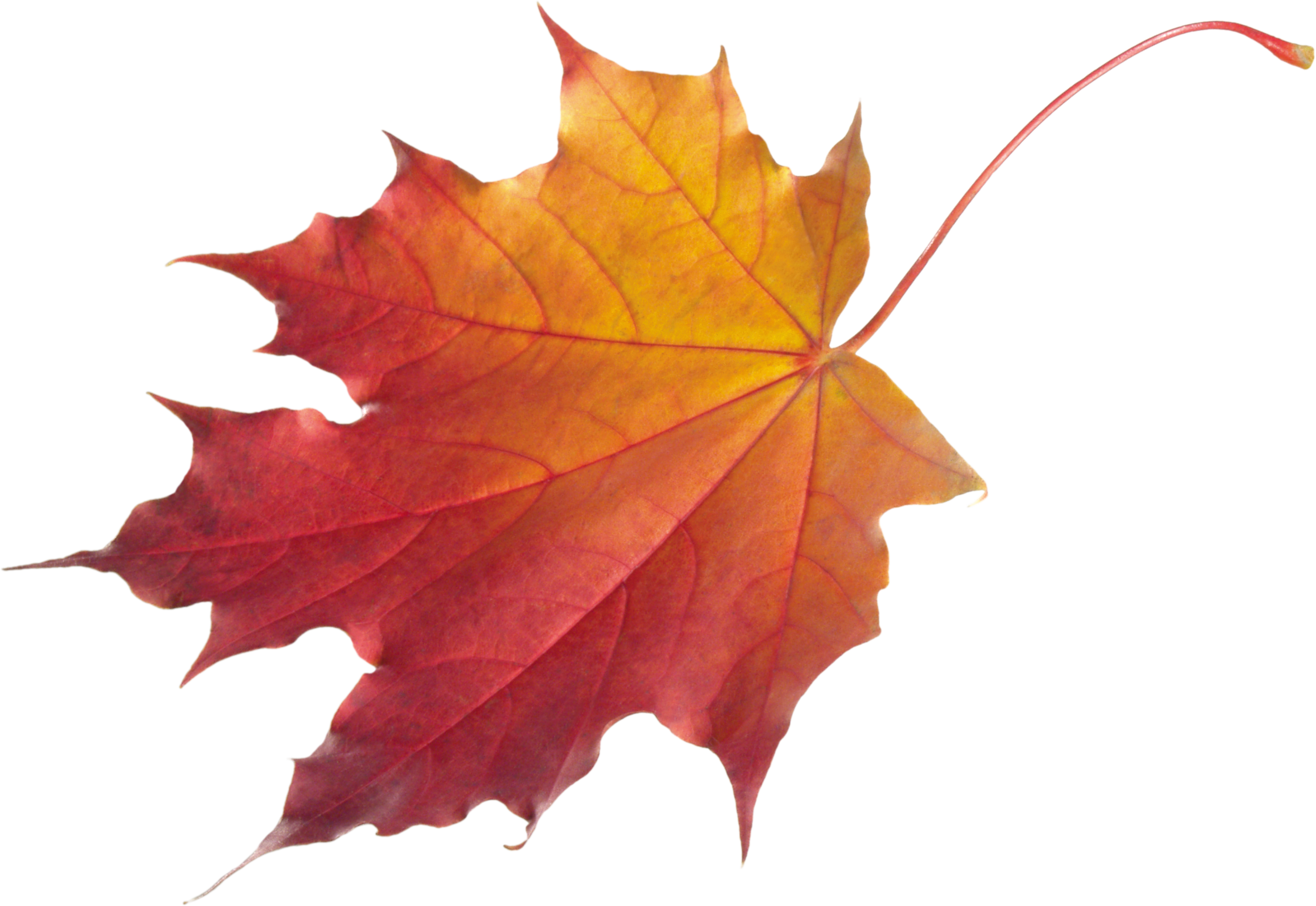 fall leaf vector png