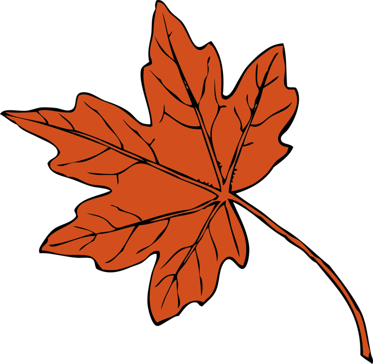 Maple clipart japanese maple. Leaf drawing autumn color