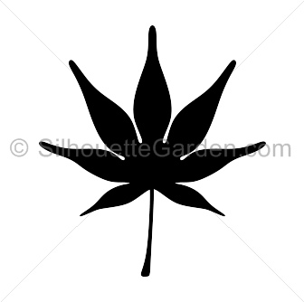 Leaf silhouette . Maple clipart japanese maple picture transparent stock